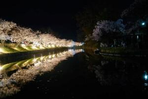 夜桜と松本城ー3
