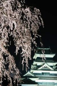 夜桜と松本城ー4