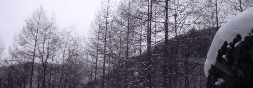 雪と氷と樹木